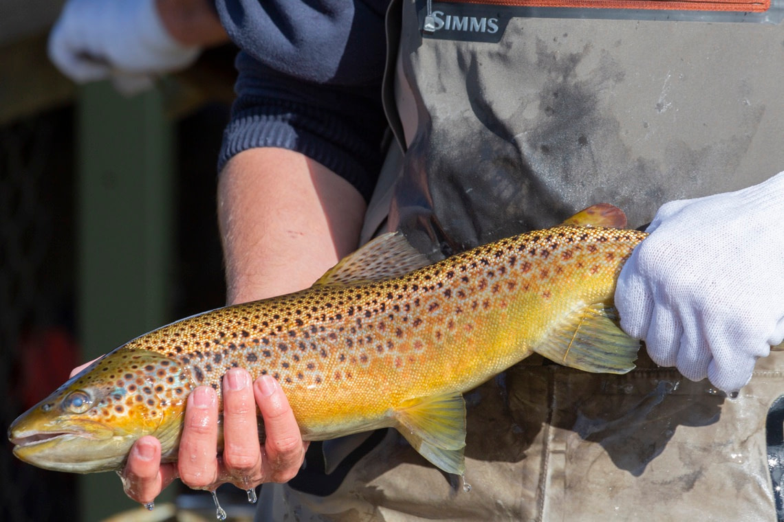 Fly fishing in Tasmania