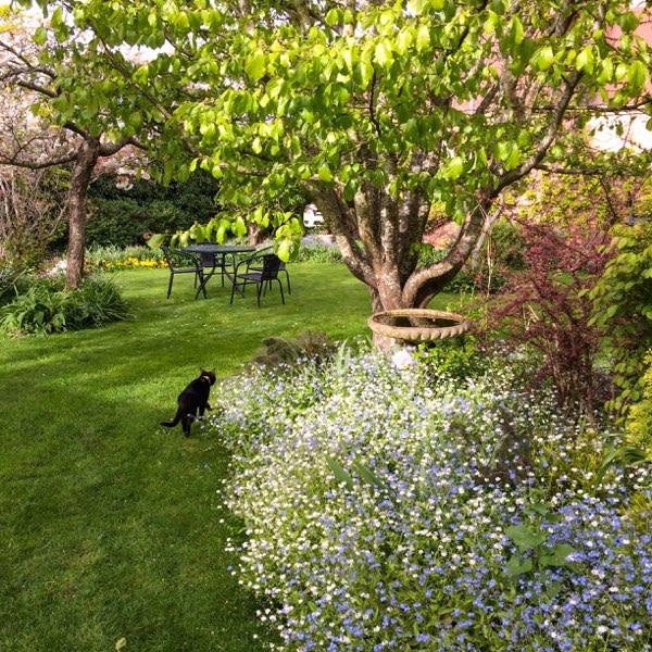 English cottage garden at the Racecourse Inn
